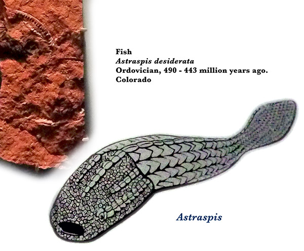 Cambrian sea bed